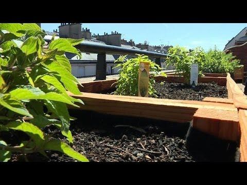 Taste Texas | Innovation: Paris Chefs Hit the Roof for Gastro Gardens