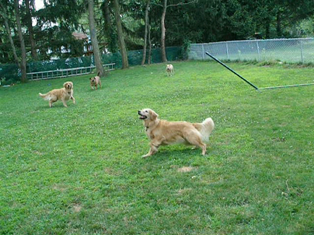 Odie, Buddy, McGruff & Chevy having fun