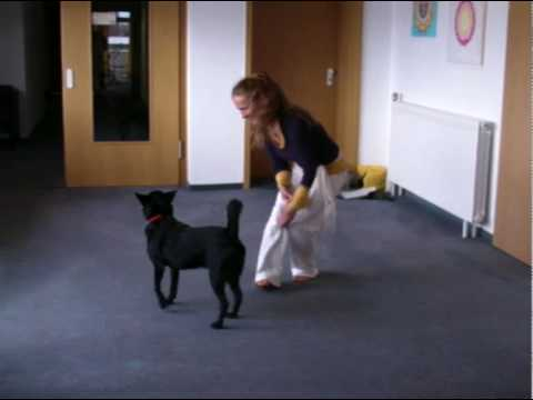 Ricky and Joscha - the yoga dogs