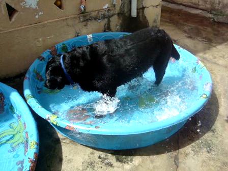 4th of july - splashing