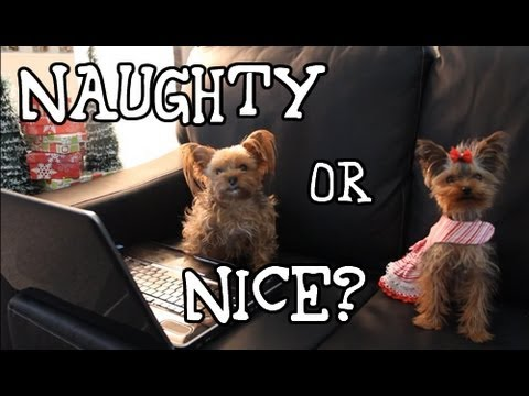 Naughty or Nice? Cute Christmas Dogs!