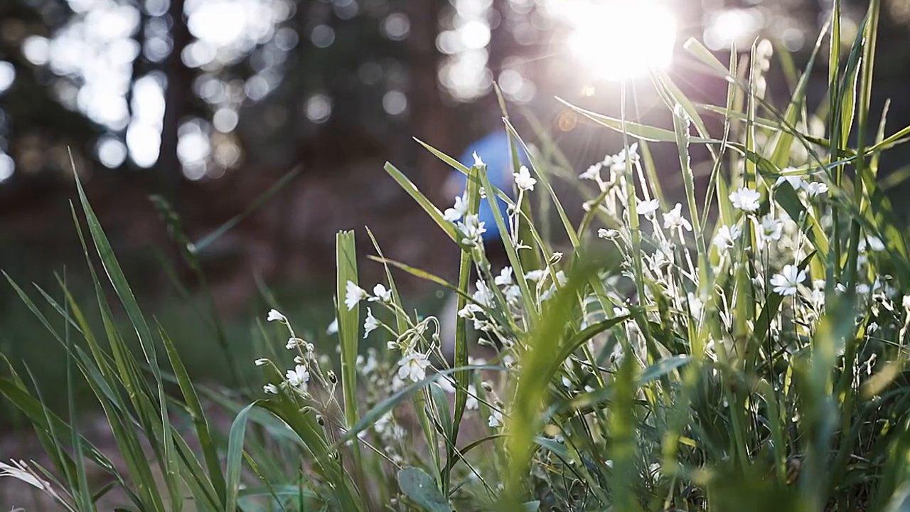 Springtime in the Flatirons