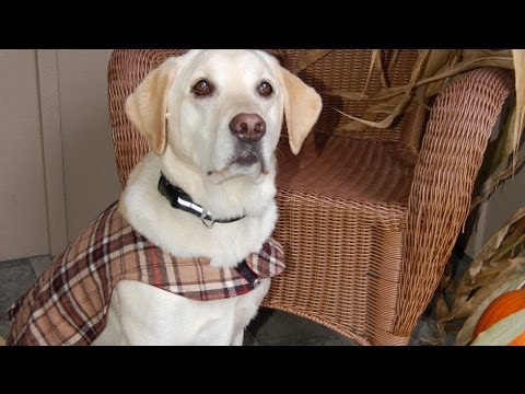 How to Sew a Custom Dog Vest