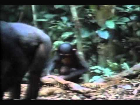 Teaching in chimpanzees