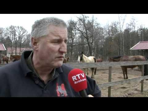 Paardenvirus velt paarden