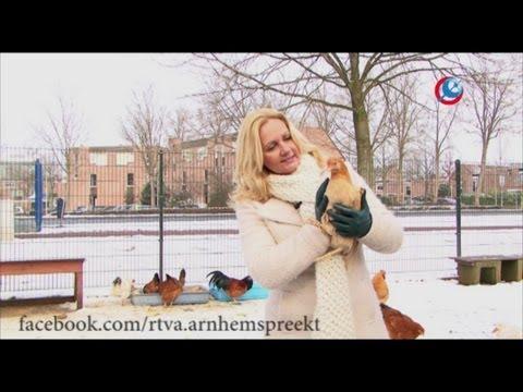 Arnhem spreekt: De plofkip