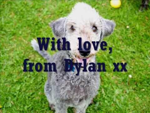 Dylan's Tale.