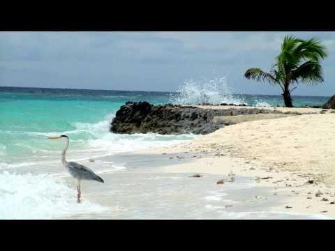 Quirky Maldives Birds