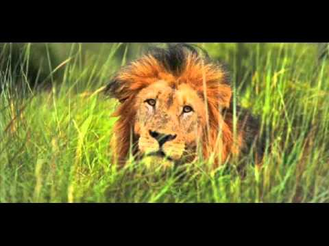 Panthera's Save Lions The Mission