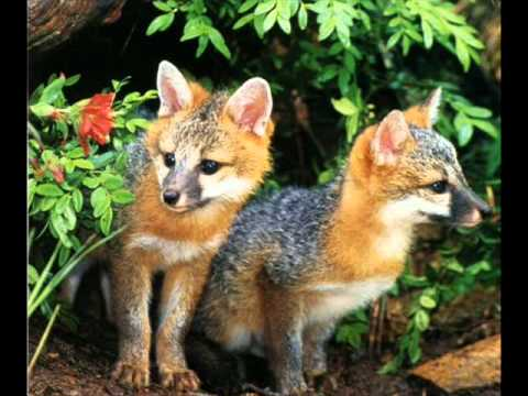 Endangered Species and Habitats