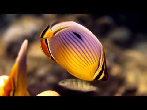 Tropical Fish Part 1