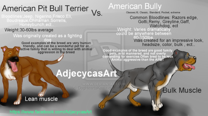American Bully And The Pit bull Terrier Differences - Blogs