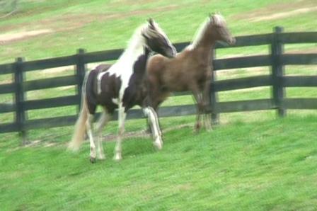 Mike Murphy's stallions