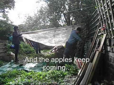 apple harvesting