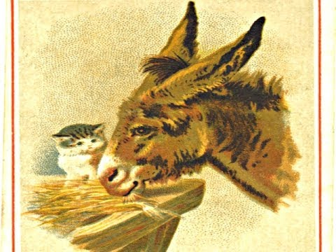 The Cat And The Mule