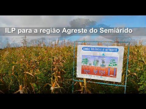 ILP para a região Agreste do Semiárido