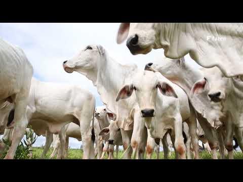 Pecuária Brasileira - História, Presente e Futuro - Gestão na Pecuária