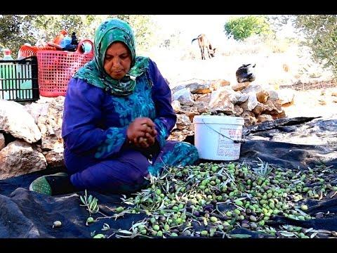 Grove to Market -- value chain work in Palestine