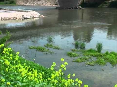 V3 - Il giardino sul fiume - i fiori di giugno