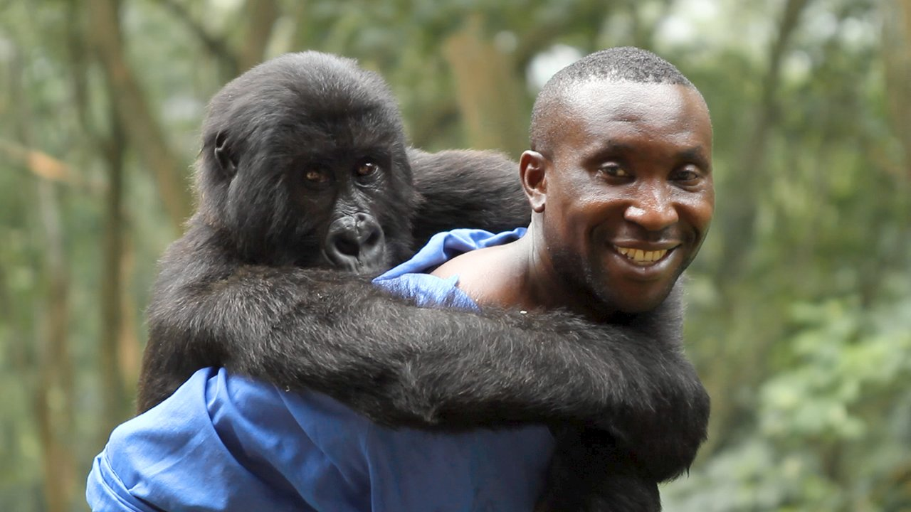 Virunga - Official Trailer 2014