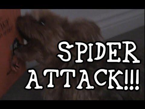 Dog Attacks Spider: Dog Attacks Singing Card