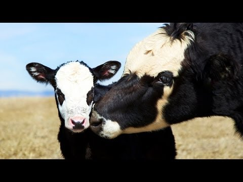 Mercy For Animals: Inspiring Compassion