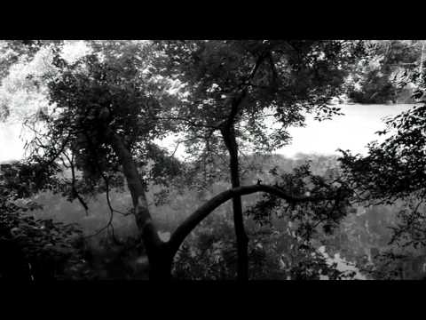 "Mark Fry / The A-Lords - ""I Lived in Trees"""