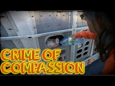10 Years In Prison For Compassion? | Anita Krajnc Trial