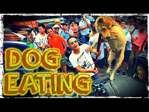 Why the YULIN Dog Meat Festival ISN'T A BIG DEAL