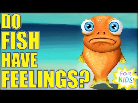 Do Fish Have FEELINGS? [KIDS Video!]