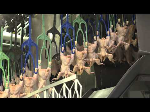 A video by the poultry industry(!) - An Inside Look at U.S. Poultry Processing