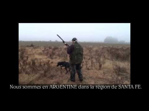 CHASSE DE RÊVE - Le chien, notre ami.