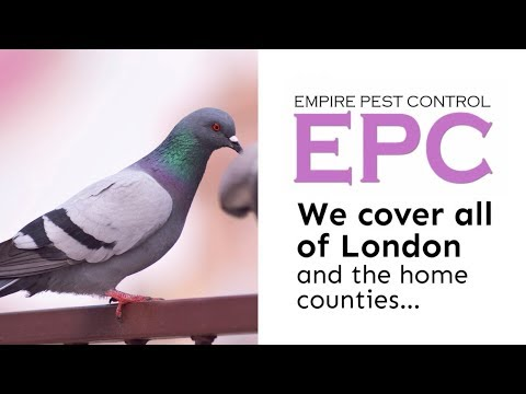 London Pigeon Problems