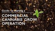 cannabis cultivation businessplan Canada