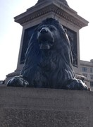 The Iconic Landseer's lion at Trafalager Square