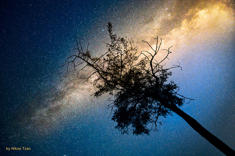 A tree in the night 3