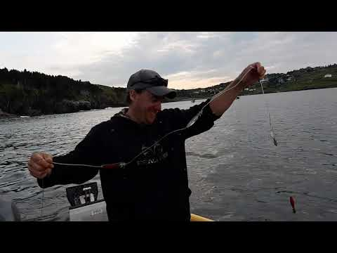 Squid Jigging in Newfoundland with Totally Outdoors NL