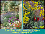 Pollinator Plant Days