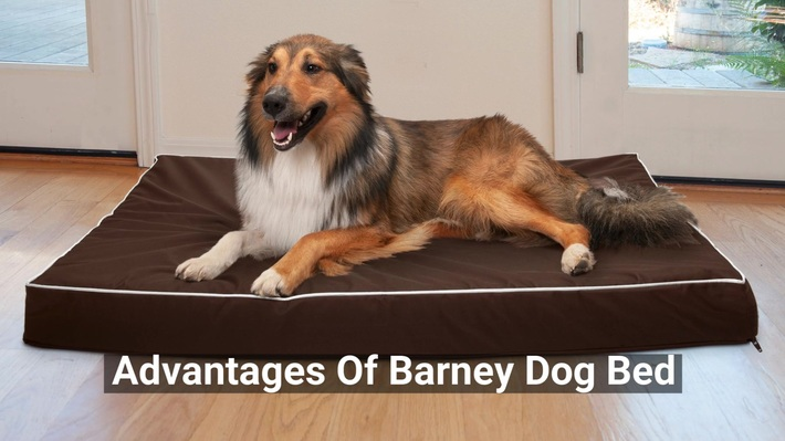 Barney Dog Bed