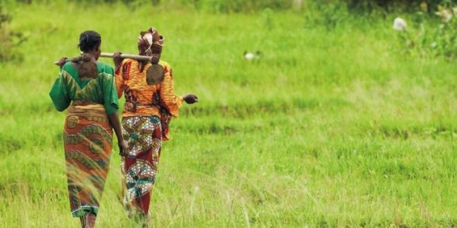 TADB calls for SADC member states to reach more smallholder farmers