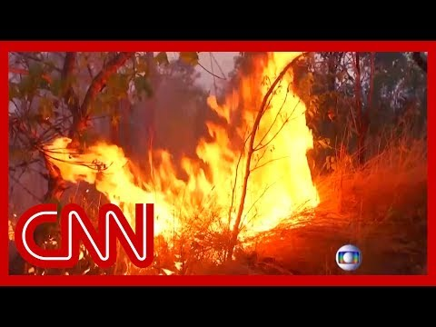 Amazon rainforest burning at record rate
