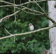 Bird Walk and Ringing Display