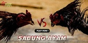 Don't Delay When It Comes To Using S128 Sabung Ayam