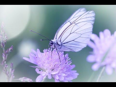 Sé Feliz Hoy y Ahora con Mozart y la Naturaleza.