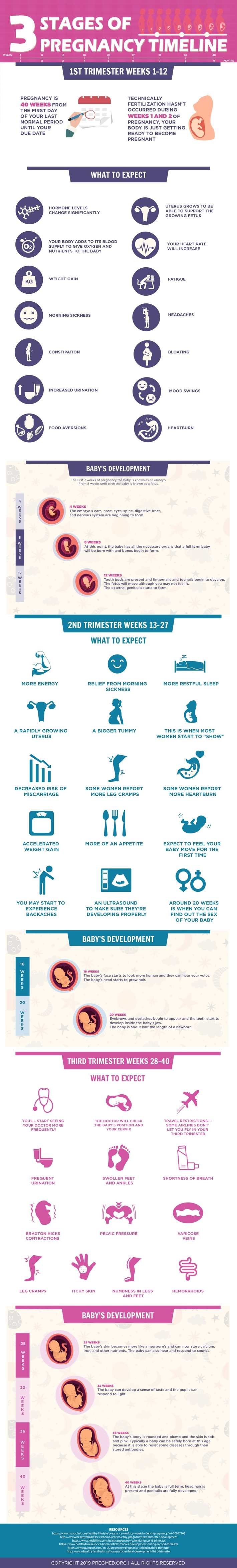 3 Stages of Pregnancy Timeline