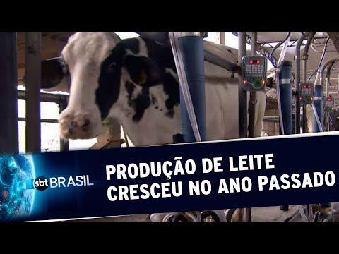 Produção nacional de leite cresceu no ano passado, aponta IBGE | SBT Brasil (20/09/19)