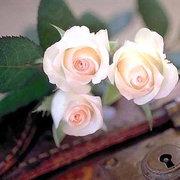 amanecer blanca