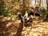 mary lynne walker