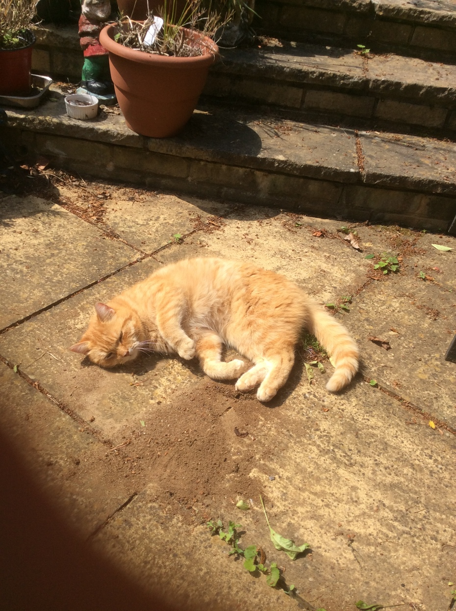 RIP my friendly neighbourly ginger cat, aka Marmalade c.2008 - Sept. 2019