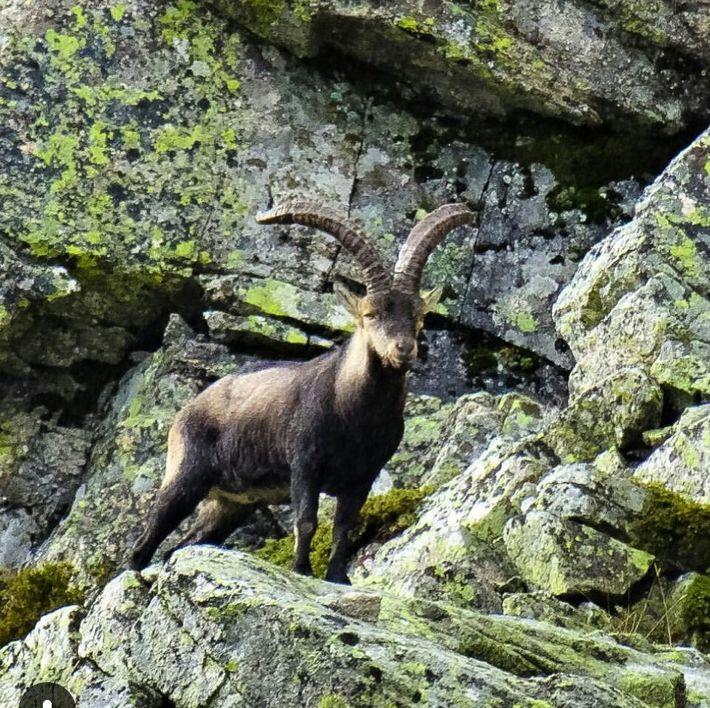 ibex castellon